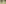 Alpine ibex - Pontresina